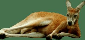 kangaroo-aussie-support